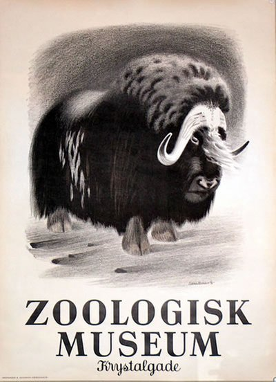Zoologisk Museum - Musk Ox - Muskox original poster designed by Hansen, Aage Sikker (1897-1955)