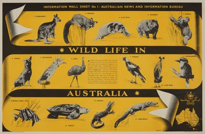 Wild life in Australia original poster designed by D. J. F.